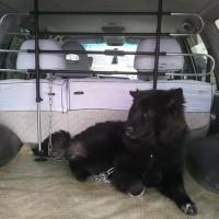 Hundegitter fürs Auto 4 Streben zur Befestigung an den Kopfstützen